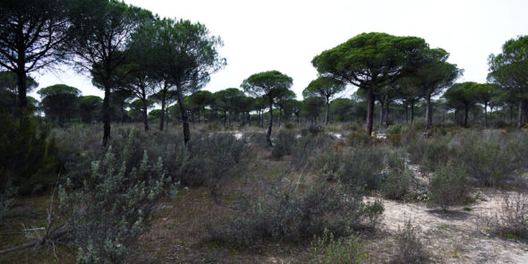 Nationalpark Donana