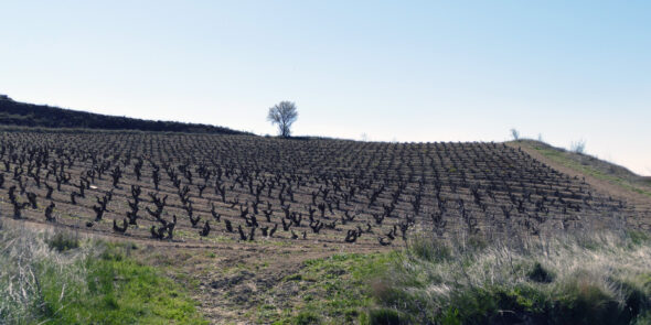Weinberg im Rioja