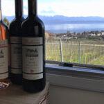 Übernachten auf einem Schweizer Weingut