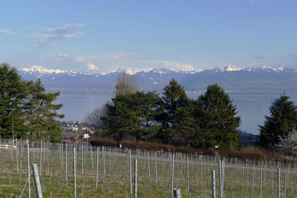Genfersee & Alpen