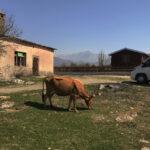 Gestrandet in Albanien